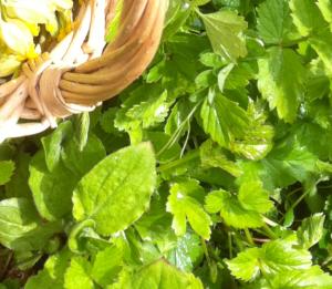 cueillette-sauvage-plantes-médicinales-recettes-sauvage