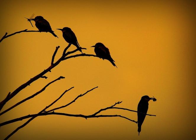 oiseaux-nature-chants