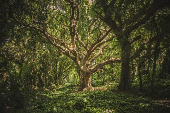 chaman-arbre-guérisseur