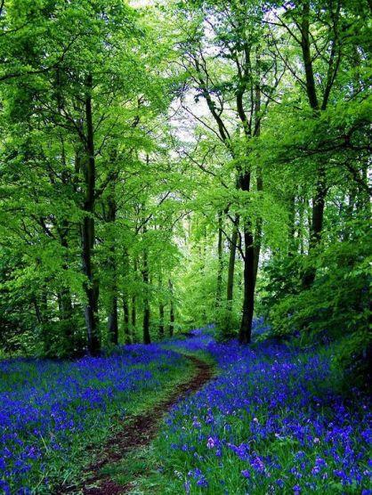 chemin-de-bluebell-fife-ecosse